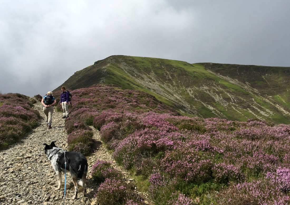 Grizedale_pike_guided_walk
